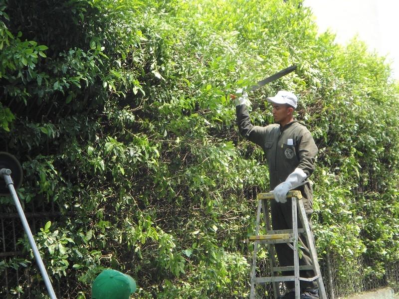mantenimiento-zonas-verdes-cali-9
