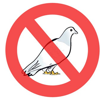 Control especializado palomas | Fumigaciones Cali