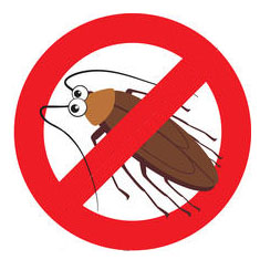 Control de Cucaracha Alemana | Fumigaciones Cali