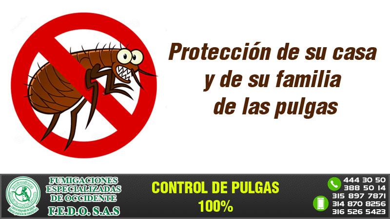 Protección de su casa y de su familia de las pulgas